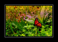 butterfly_wing_spur_ranch_2016
