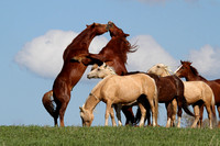 Horses of the Wild West 2014