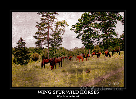 wing_spur_wild_horses7