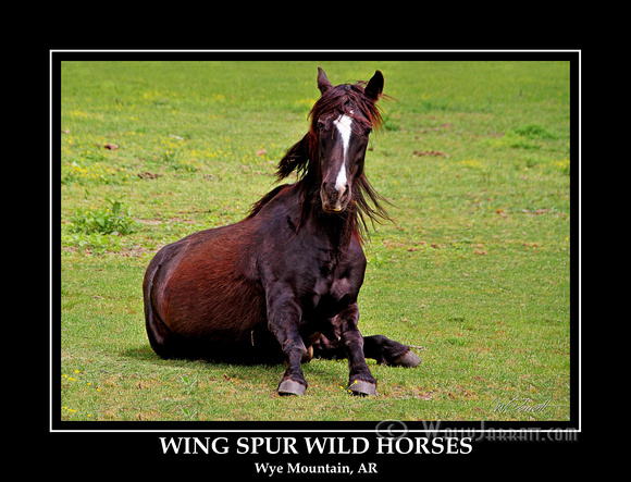 wing_spur_wild_horses11