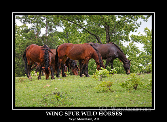 wing_spur_wild_horses12