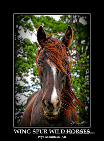 wing_spur_wild_horses9
