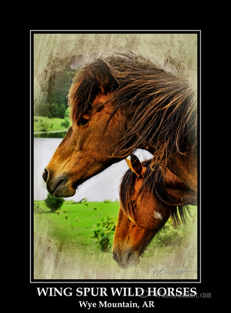 wing_spur_wild_horses10
